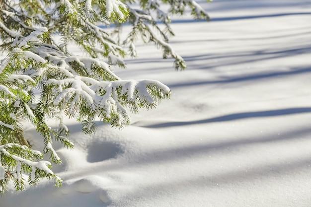 Branches de sapin couvertes de neige fraîche, surface d'hiver
