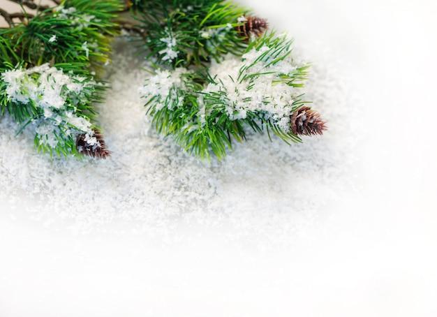 Branches de sapin de noël dans la neige sur un blanc