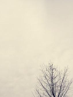 Branches sèches d'arbre avec ciel nuageux