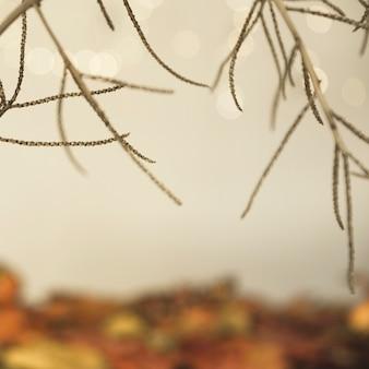 Branches sèches automne sur fond multicolore floue