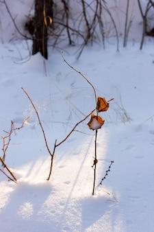 Branches sèches avec des baies et des feuilles sur la neige blanche