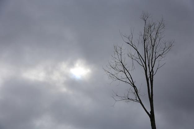 Branches sèches avec ciel