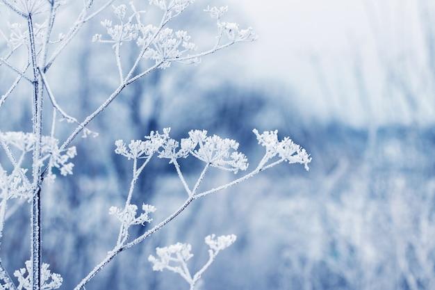 Branches sèches couvertes de neige de plantes sur fond de forêt d'hiver, vue d'hiver