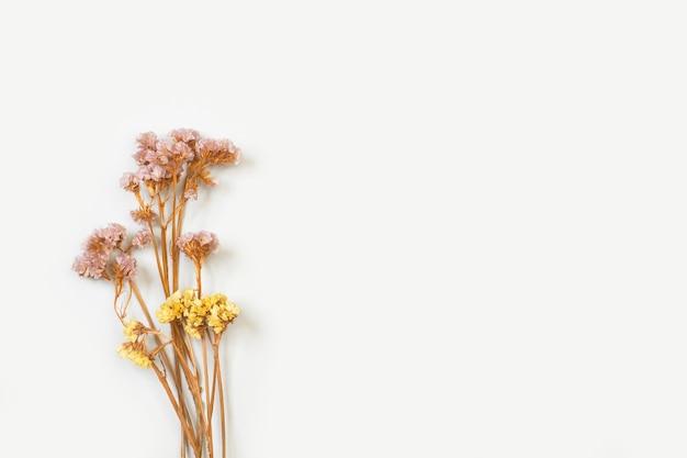 Branches sèches et fleurs isolés sur fond blanc avec espace copie