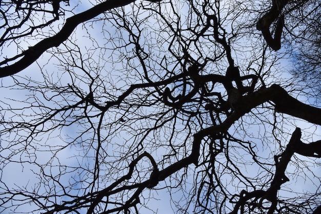 Branches sèches noires d'un arbre contre un ciel bleu et blanc au printemps