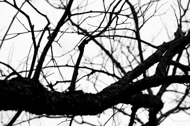 Branches sèches