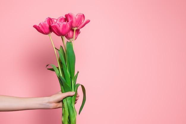 Bras féminin tient un bouquet de tulipes roses isolé sur fond rose clair