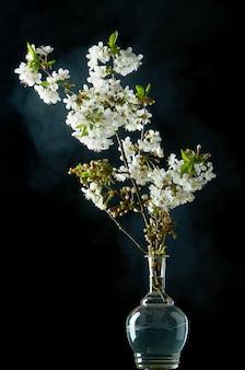 Brin de fleurs de cerisier blanches en fleurs sur fond noir