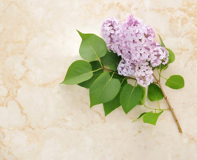 Brin de fleurs de lilas sur un marbre