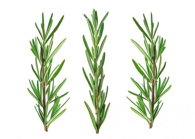 Brin vert frais de romarin isolé sur blanc
