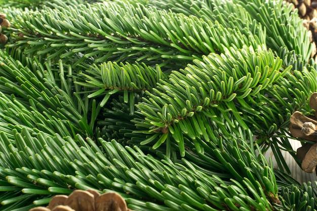 Brindille d'épinette verte naturelle sur fond blanc. branches de sapin luxuriantes ou brindilles de pin vue de dessus de texture de brin