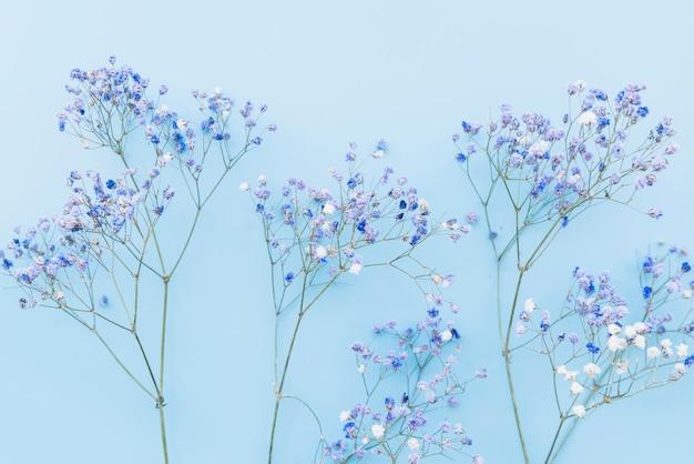 Brindilles fraîches de petites fleurs bleues