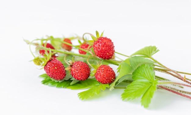 Brindilles de fraises sur fond gris