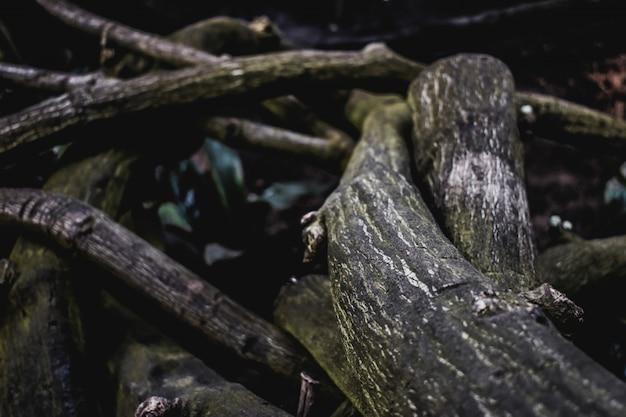 Brindilles racines texture tropique de la jungle