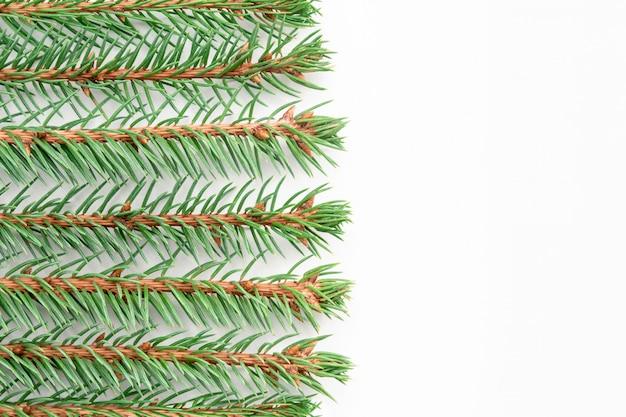 Des brins d'épinette bleue se trouvent horizontalement dans des rangées paires sur un fond blanc.
