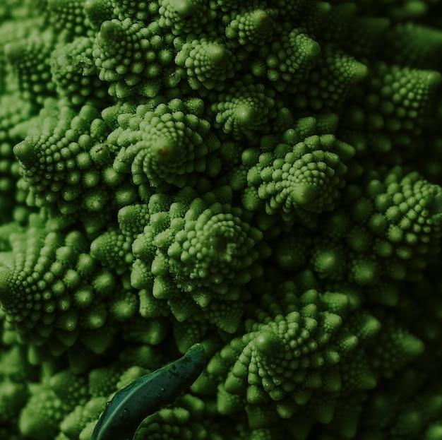 Brocoli romanesco bio frais et sain