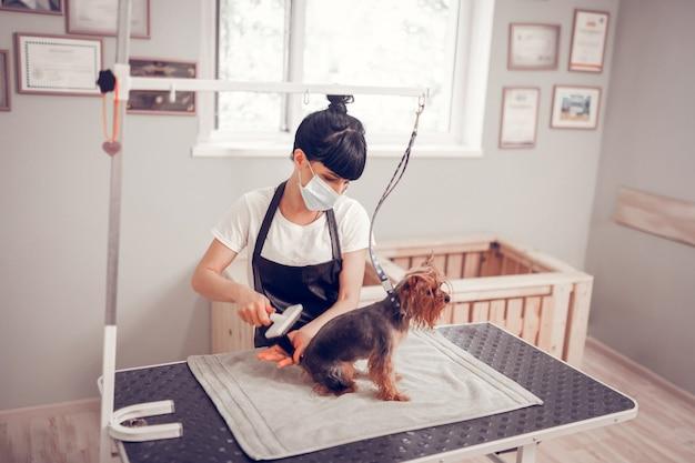 Brossage après lavage. vue de dessus d'une femme portant un masque et un tablier brossant le chien après le lavage