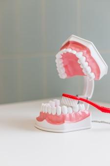 Brosse à dents et mâchoire