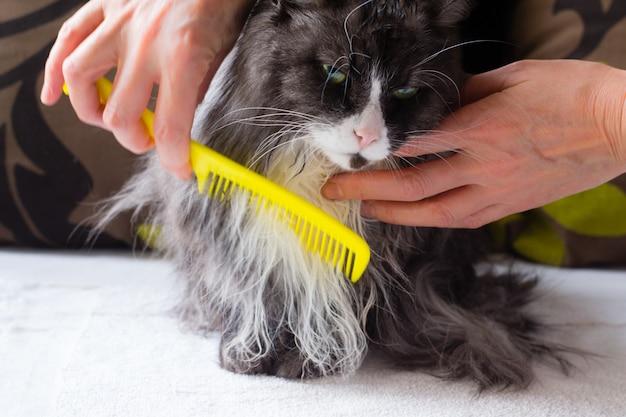 Brosses à main femme chat moelleux