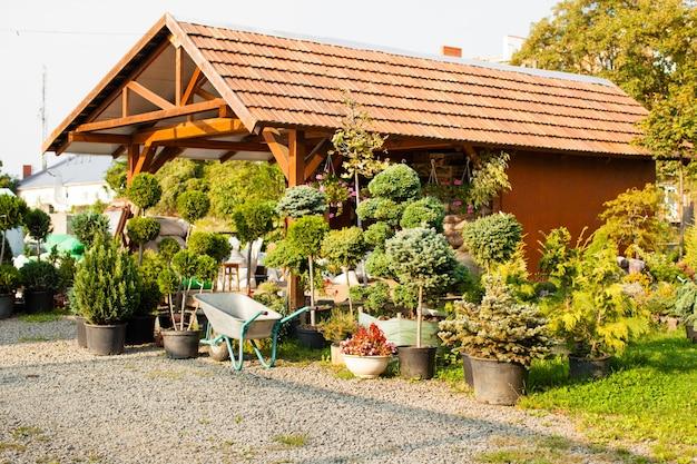 Brouette près de diverses plantes à feuilles persistantes en magasin de jardin