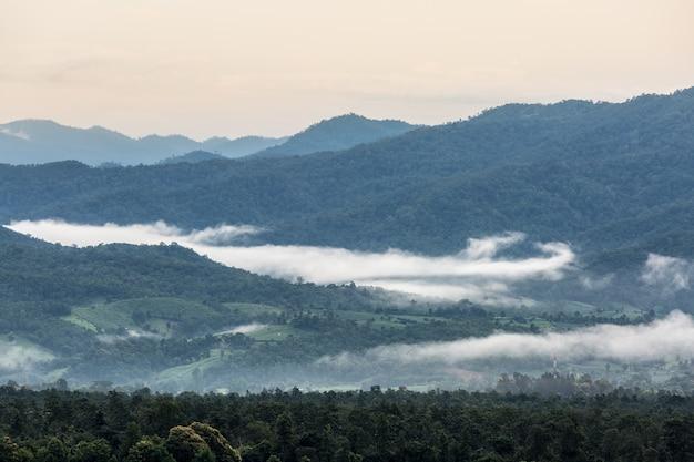 Brouillard au-dessus des montagnes vertes
