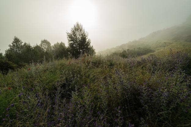 Brouillard de l'aube