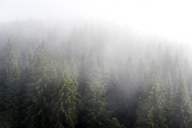 Brouillard brumeux dans la forêt de pins sur les pentes de la montagne dans les carpates. paysage avec beau brouillard en forêt sur la colline.