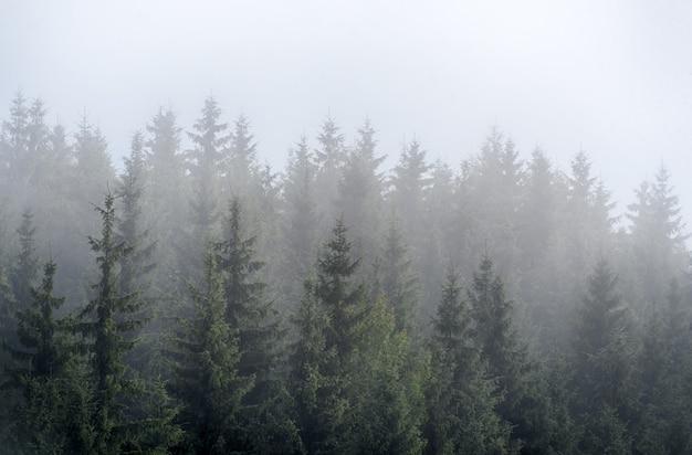 Brouillard brumeux dans la pinède sur les pentes des montagnes