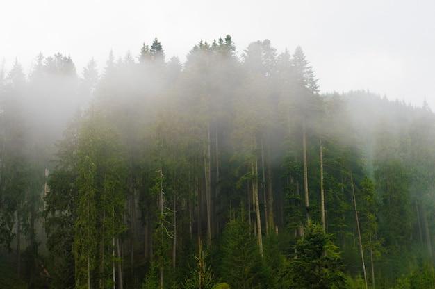 Brouillard dans les arbres, dans la forêt, coucher de soleil, aube, ciel couvert, nature, pataugeoire