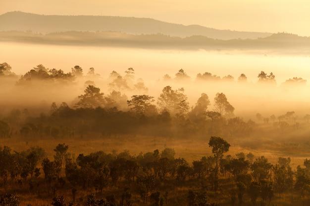 Brouillard dans la forêt au parc national thung salang luang.