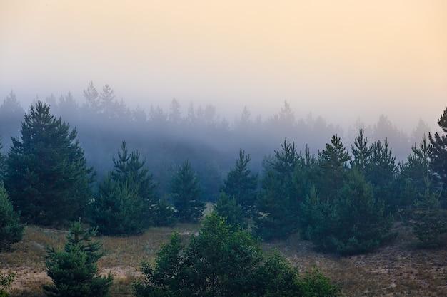 Brouillard dans la forêt dense de conifères