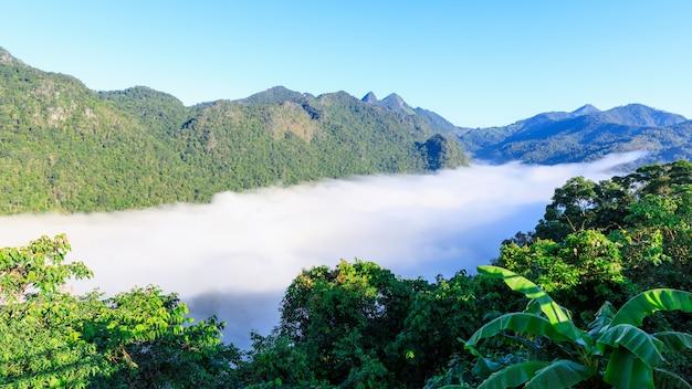 Brouillard dans la vallée de chiang rai en thaïlande