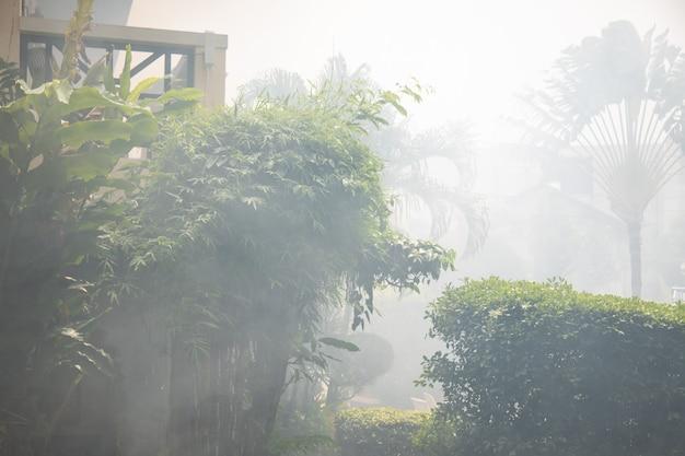 Brouillard du matin dans un jardin tropical dans les montagnes.