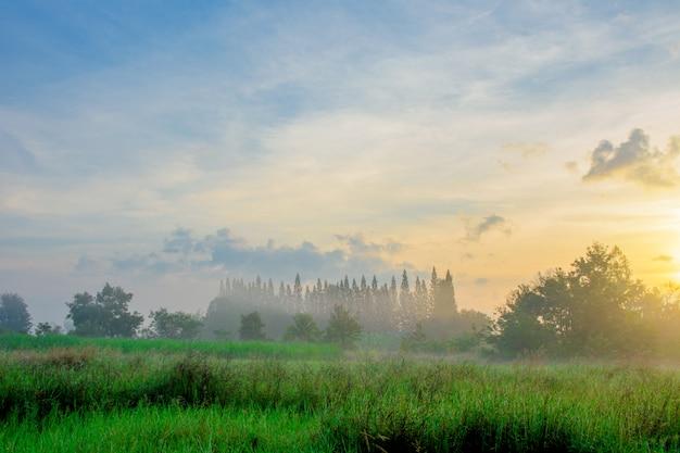 Brouillard du matin en hiver.