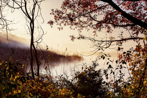 Brouillard du matin sur la rivière en automne