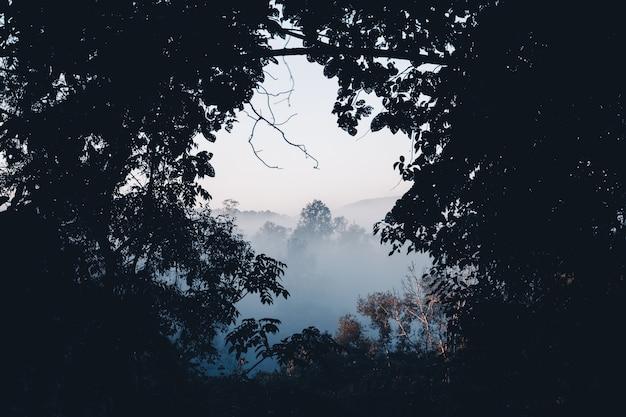 Brouillard et forêt le matin, dans la forêt du matin