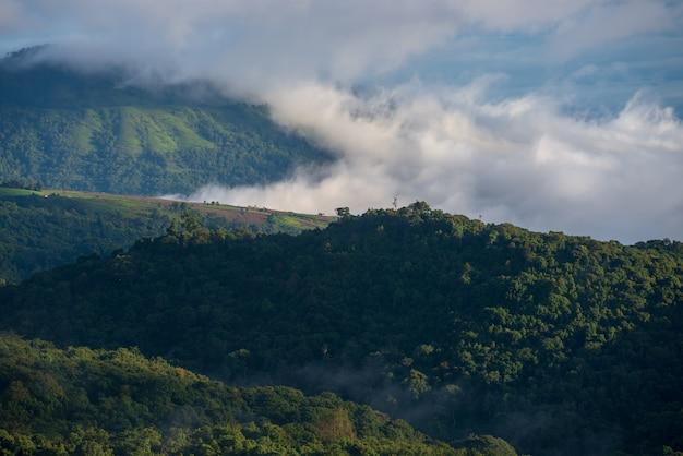 Brouillard sur la forêt et les montagnes