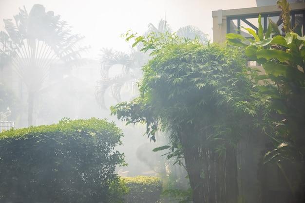 Brouillard de fumée dans les palmiers. les rayons du soleil se frayent un chemin à travers les branches des palmiers dans le jardin tropical.