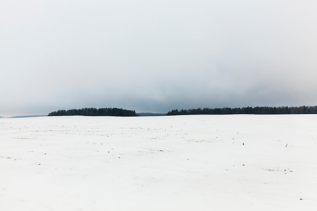Brouillard en hiver - forêt pendant l'hiver après la dernière chute de neige, brouillard et mauvaise visibilité espace silhouettes d'arbres et de brouillard sur le terrain