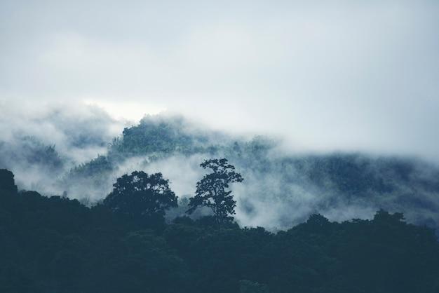 Brouillard sur la montagne dans la forêt tropicale de la thaïlande.