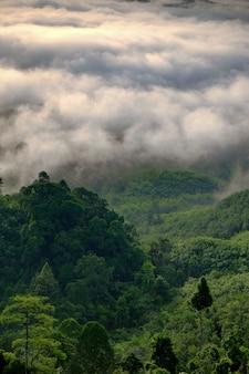 Brouillard montagne