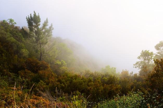 Brouillard sur les montagnes