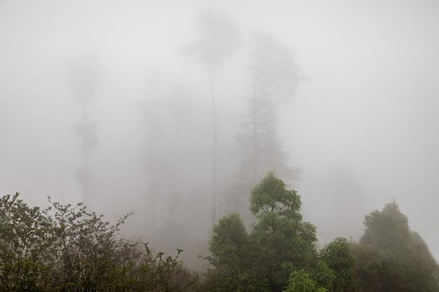 Brouillard profond