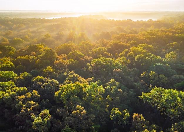 Brouillard recouvrant la forêt d'automne avec des arbres déjà en train de changer de couleur.