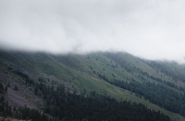 Brouillard recouvrant les forêts de montagne. montagnes vertes