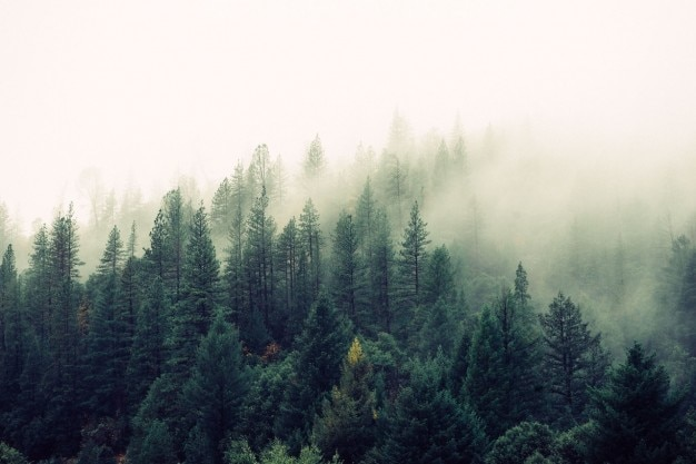 Brouillard venir à la forêt