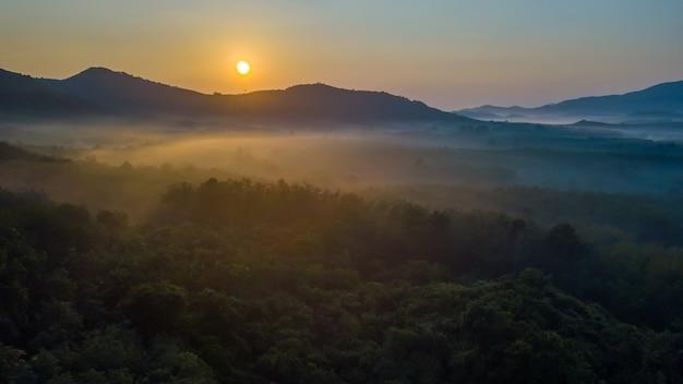 Brouillard, vue aérienne, sur, forêt