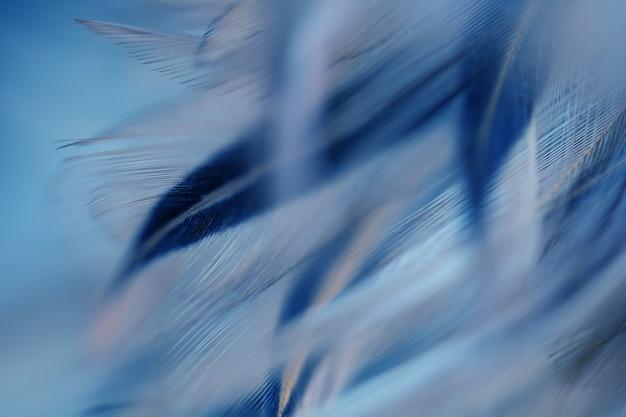 Brouiller la texture de plume de poulets oiseaux pour le fond, fantasy, résumé, couleur douce de la conception de l'art.