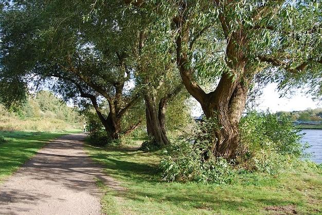 Brouter les arbres nature uferweg ruhr