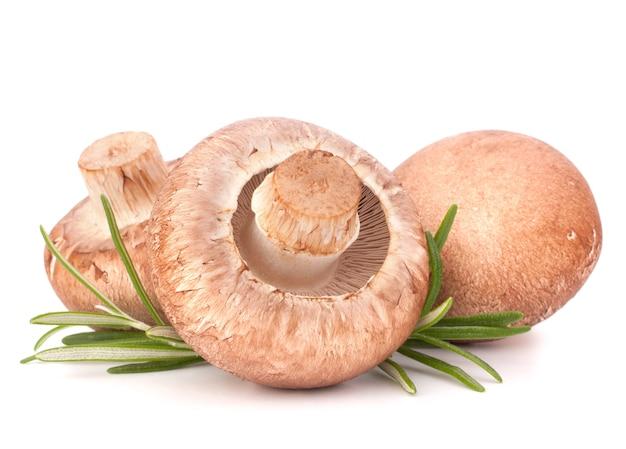 Brown champignon champignon et feuilles de romarin découpe isolée